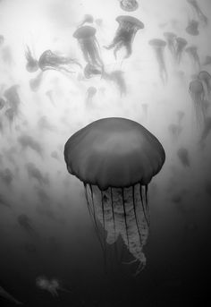 Sea Nettle Wonderland by Tay T. Tousey