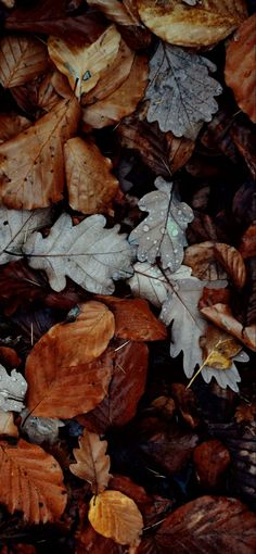 Iphone Wallpaper Herbst, Fall Wallpaper, Autumn Leaves Wallpaper, Iphone Wallpapers, Fall Instagram Captions, Fall Background, Autumn Aesthetic, Fall Flowers, Autumn Inspiration