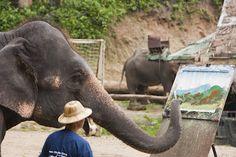 Elefantes artistas de Chiang Mai #Tailandia