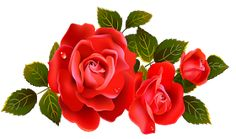 Red Rose Png, Rose Flower Png, Flower Art, Red Roses, Yellow Roses, Rose Flower Pictures, Flower Png Images, Art Floral, Rose Clipart