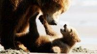 Bears Trailer 2014 Disney Movie – Official [HD] #Bears #animal #wildlife