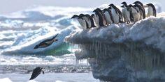 Cómo descubrieron desde el espacio una enorme colonia de pingüinos en la Antártida - La Prensa Gráfica