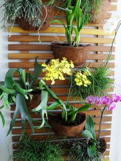 Dena Interiores - Vertical garden with staghorn ferns and orchids