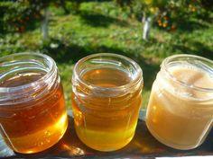 Στο Ορεινό Μέλι συλλέγουμε σχεδόν όλες τις ποικιλίες που παράγονται στην Ελλάδα. All the honey varieties we collected this year!