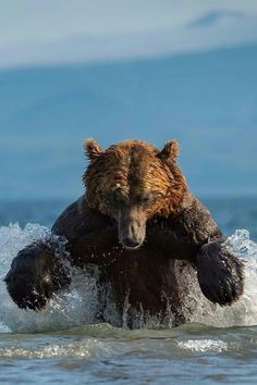 Splish Splash Grizzly Bear!