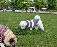 Heldenplatz Wien. #OTELLOONLINE #ADMETOS #DOGPULLOVER #HUNDEPULLOVER #littledog Dog Sweaters, Dogs, Animals, Heroes, Animales, Animaux, Pet Dogs, Doggies, Animal
