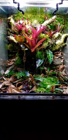 Pet Frogs, Poison Dart Frogs, Vivarium, Horticulture, Water Features, Habitats, Pools, Tanks, Projects To Try