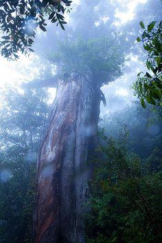 Forest on Yakushima Island, Japan By Casey Yee