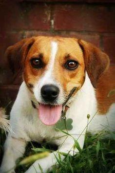 Jack-A-Bee (aka my pup)