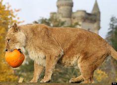 Zoo animals play on Halloween