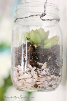 Hanging Mason Jar Succulents are a gorgeous item for your home and an easy DIY project - fill with mini shells, soil and succulents. Mason Jar Succulents, Hanging Succulents, Succulent Pots, Hanging Plants, Mason Jar Projects, Mason Jar Crafts, Diy Projects, Cactus, Hanging Mason Jars