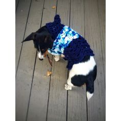 Knit Crochet Dog Hoodie Dachshund Unique Handmade Small White Blue Lace Little Dog Sweater Long Torso Dogs Corgi ($55) found on Polyvore