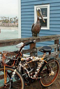 this bike is fascinating. gotta love a beach bike.