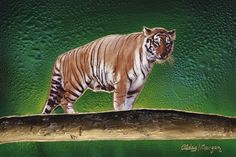 """Tiger Tiger is an original fine art painting by the Artist Jeurgen Aldag.  Artist Name: Jeurgen Aldag  Size : 24 Length x 36"""" Wide Media : Original Painting-Mixed Media On Canvas Retail Price: $5900 Comes with a Certificate of Authenticily signed"""