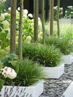 Drie losse 'bloembakken' geeft meer design uitstraling dan 1 grote lange border. Mooie combinatie van tegels, grind, witte bakken, siergrassen, bomen en hortensia's.