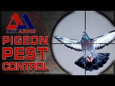 Need Pest Control Services In Mattapoisett Ma Get Emergency Pest Control Services