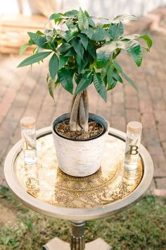 Unity ceremony. Watering of the tree. Fall wedding. Nashville, TN