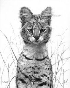 serval drawing by aleksandar_alexov, via Flickr