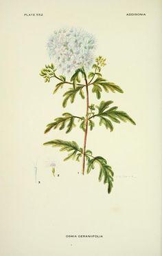 v.17 (1932) - Addisonia : - Biodiversity Heritage Library