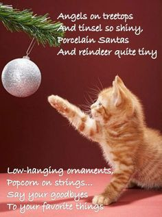 say goodbye.... For more Christmas cats, visit https://www.facebook.com/funholidaycats