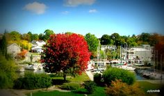 Perfect Tree in Oakville Harbour - Old Oakville Largest Countries, Countries Of The World, Ontario, Canada, Mansions, Country, House Styles, Beautiful, World Countries