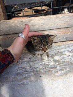 Black and white kitten: Mom said not to talk to strangers! (Bodrum Turkey)