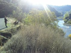 Hiking with dogs in Auburn, Ca