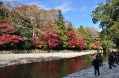 今年も紅葉シーズン到来!紅葉が美しいオススメ観光スポット。Kotoshi mo kouyou shiizun tourai! Kouyou ga utsukushii osusume kankyou supotto. Tahun ini pun musim daun merah telah datang! Spot wisata rekomendasi dengan daun merah yang cantik.