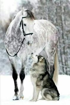 Pin by Yolanda Stadtler on Tiere Funny Horses, Cute Horses, Pretty Horses, Horse Love, Horse Photos, Horse Pictures, Cute Animal Pictures, Most Beautiful Horses, Animals Beautiful