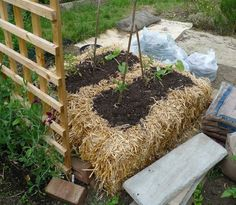 10 Intensive Gardening Methods That Really Work To Maximize Available Space... - http://www.ecosnippets.com/gardening/10-intensive-gardening-methods-that-really-work-to-maximize-available-space/