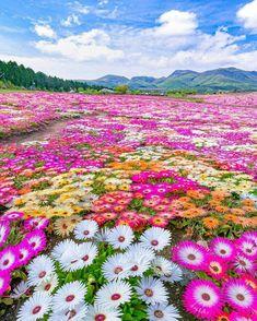 Flowers Nature, Spring Flowers, Wild Flowers, Beautiful Flowers, Beautiful Places, Beautiful Pictures, Beautiful Landscapes, Beautiful Gardens, Oita
