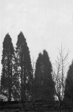 shadow forest by minnamaria on DeviantArt Trees, Deviantart, Outdoor, Outdoors, Tree Structure, Wood, Outdoor Living, Garden, Plant