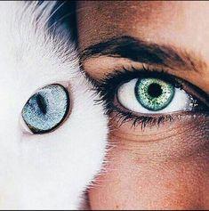 Eyes, cat, and blue image pretty eyes, beautiful eyes color, cool eyes Beautiful Eyes Color, Pretty Eyes, Cool Eyes, Eye Photography, Creative Photography, Animal Photography, Fashion Photography, Aesthetic Eyes, Landscape Illustration