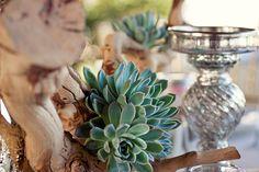 Succulent love~!