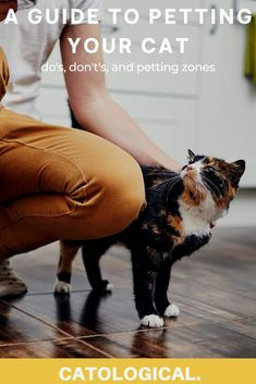 Today we'll cover the proper (and improper) ways to pet your feline pal. Our guide will teach you how and where to pet your kitty in order to make the experience pleasant for the cat and to avoid any possible incidents. #cats #catpetting #catcare #cattips