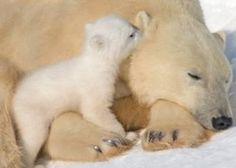 hey #Baby Animals #cute baby Animals
