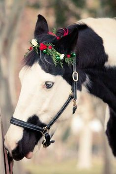 25 Christmas Animals from Around the World - meowlogy All The Pretty Horses, Beautiful Horses, Animals Beautiful, Christmas Horses, Christmas Animals, Merry Christmas, Christmas Lights, Cute Horses, Horse Love