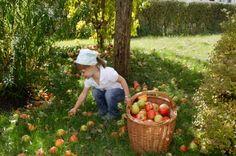 Haiming Apples   Culinary hike   null   Tirol in Austria