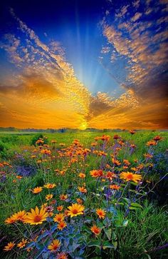 """Fantastic landscape photograph of a field of daisies at sunrise in Wisconsin, entitled """"Daisy Dream"""" by Phil Koch on Captured with a Canon EOS Focal Length Shutter Speed Aperture ISO/Film flowers Beautiful Sky, Beautiful Landscapes, Beautiful World, Beautiful Flowers, Beautiful Places, Beautiful Images Of Nature, Landscape Photography, Nature Photography, Scenic Photography"""