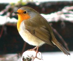 Birds in my winter garden ~ Birds UK
