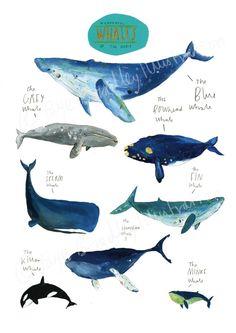 Baleines merveilleux du monde. À tirage limité par Bradley Faye