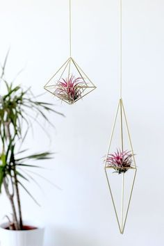 17 of The most inexpenisve yet decorative DIY hanging planters Hanging Air Plants, Diy Hanging Planter, Indoor Plants, Funky Junk Interiors, Air Plant Display, Plant Decor, Decoration Plante, Deco Floral, Plant Shelves