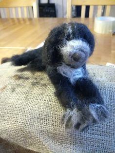 Espanjan vesikoira huovutettuna. Lamb, Dogs, Animals, Animales, Animaux, Pet Dogs, Doggies, Animal, Animais