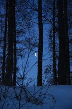 Snow Forest, Night Forest, Dark Forest, Winter Moon, Dark Winter, Night Aesthetic, Blue Aesthetic, Canciones Ariana Grande, Image Bleu