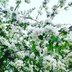 #spring Spring, Plants, Instagram, Planters, Plant, Planting
