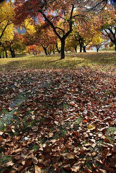 hunza autumn - Pakistan