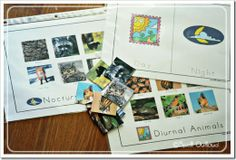 nocturnal & diurnal animals sorting activity (could be great to introduce in Kissing Hands lessons)