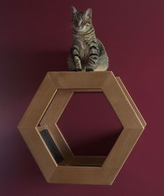 Wall Mounted Cat Shelf HabiCat 2