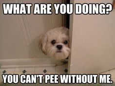 Add a toddler and you have every trip to the bathroom in my house