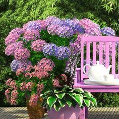 Hydrangea Macrophylla, Pergola, Flowers, Plants, Gardening, Vegetables, Pink, Floor Texture, Garten